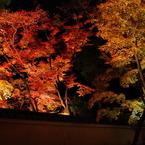 PENTAX PENTAX K20Dで撮影した風景(虹紅葉)の写真(画像)