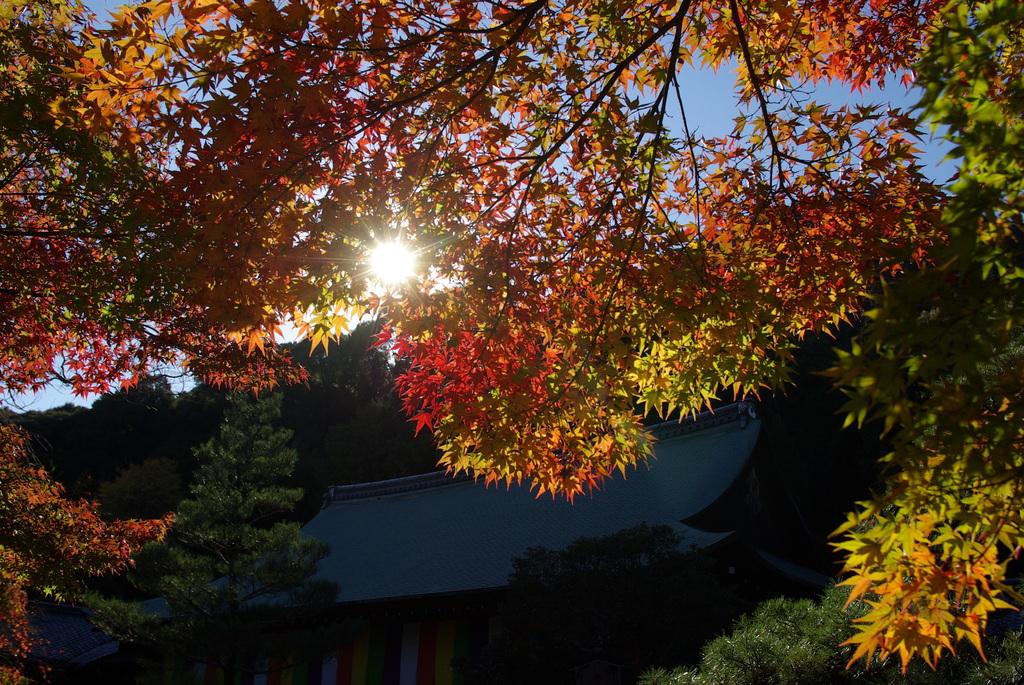 紅葉の天蓋