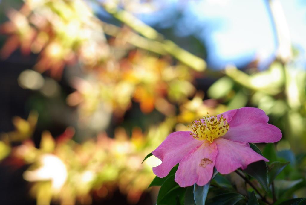 快晴の秋の日