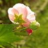 PENTAX PENTAX K10Dで撮影した植物(諸行無常)の写真(画像)