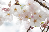 flower avenu
