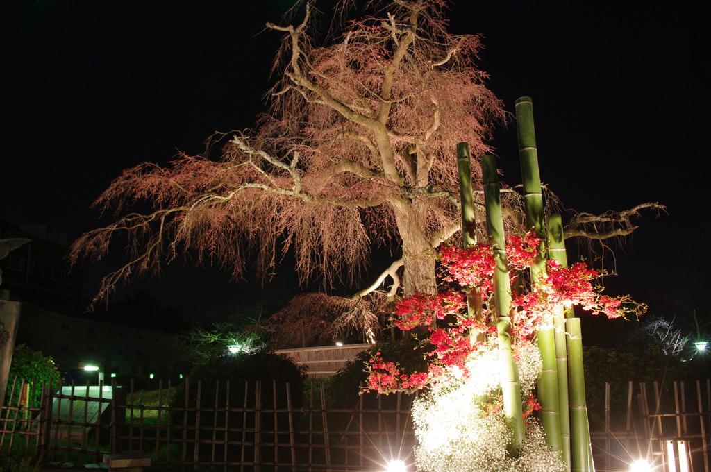 桜色の背景