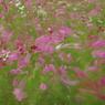 PENTAX PENTAX K10Dで撮影した植物(秋風)の写真(画像)