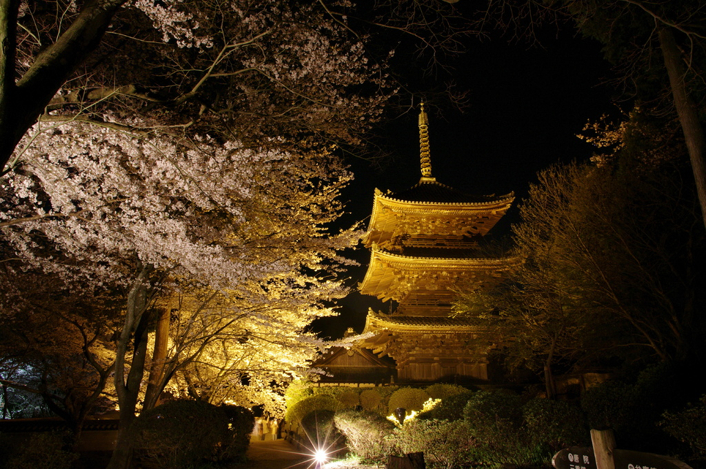 夜桜の三重塔