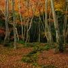 落ち葉の庭園