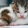 双子の子猫