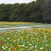 万博記念公園 花の丘