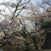 満地谷 桜