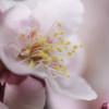 万博記念公園 梅祭り