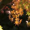 鶴見緑地 紅葉