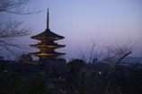 京都東山花灯路 八坂の塔