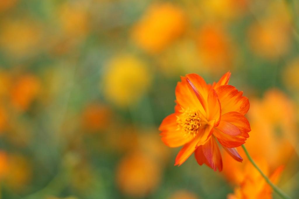 オレンジ色の世界