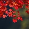 a pretty leaf