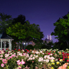 港の見える丘公園の夜薔薇