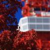 赤い紅葉と東京タワー