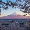 夕景富士、桜花に囲まれて