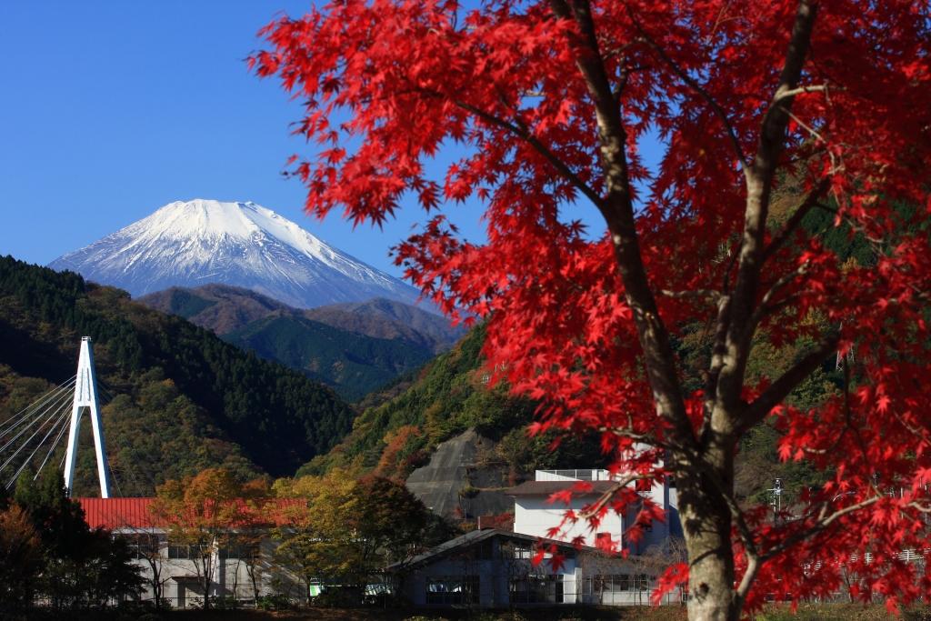 紅葉の丹沢湖畔より望む富士