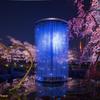毛利庭園クリスタル花火と桜のライトアップ