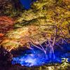 六義園・紅葉と大名庭園のライトアップ