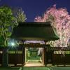 長遠寺のしだれ桜ライトアップ