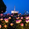 夜薔薇と氷川丸【2】