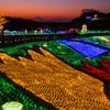 東京ドイツ村ウインターイルミネーションと夕景富士(2)