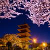 池上本門寺五重塔と夜桜
