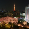 春の毛利庭園と東京タワー夜景