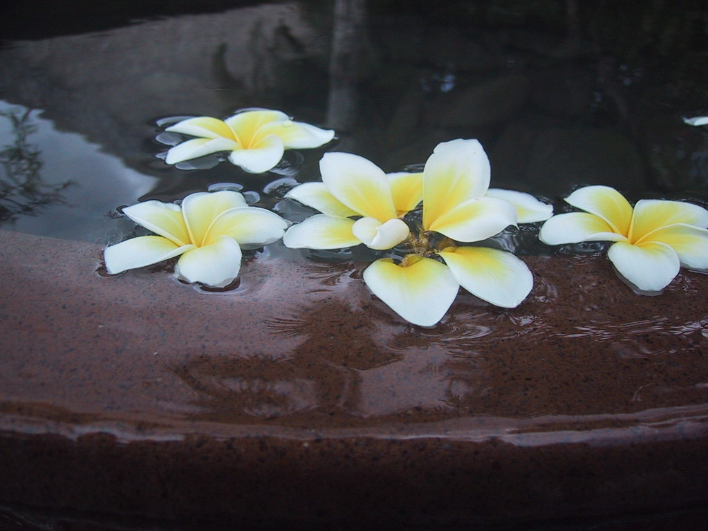 花~バリにて