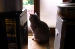 実家の猫 20