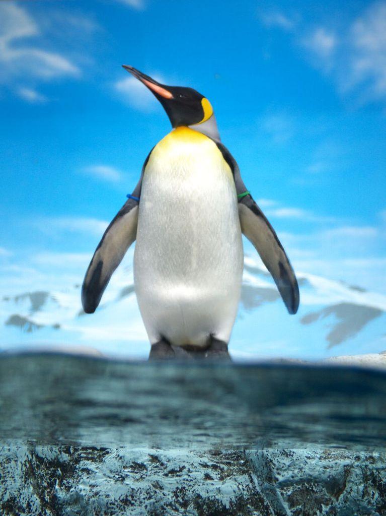 ここは南極