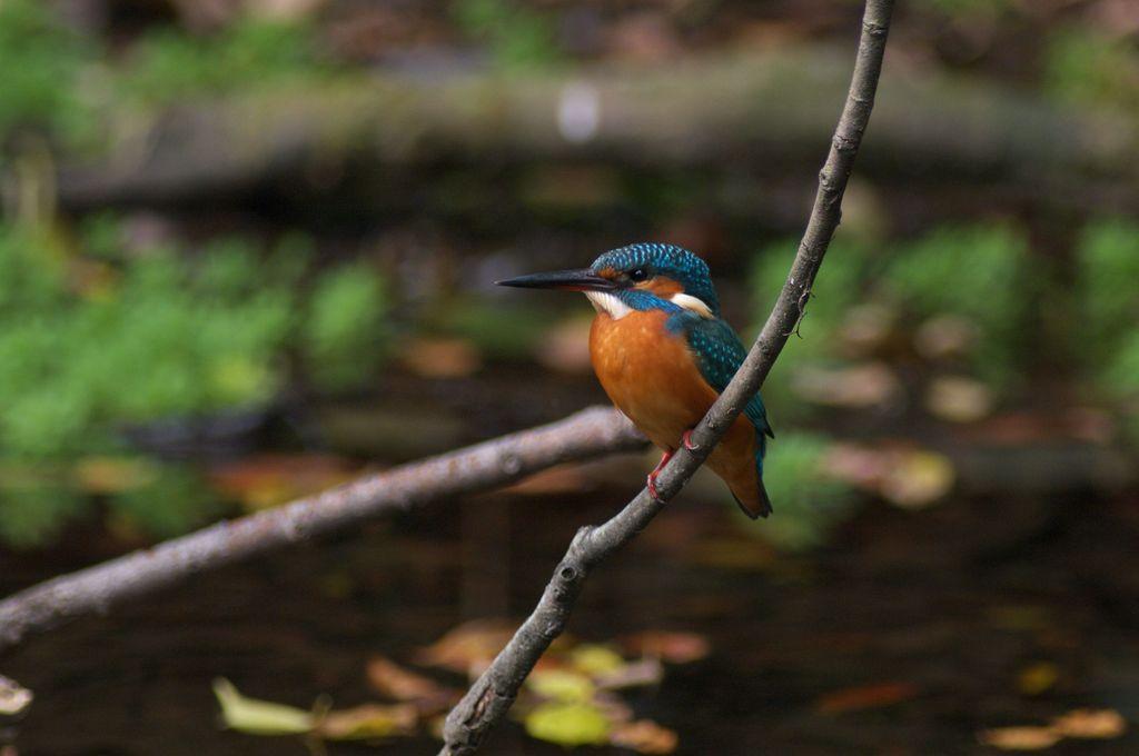 小さな池の姫様