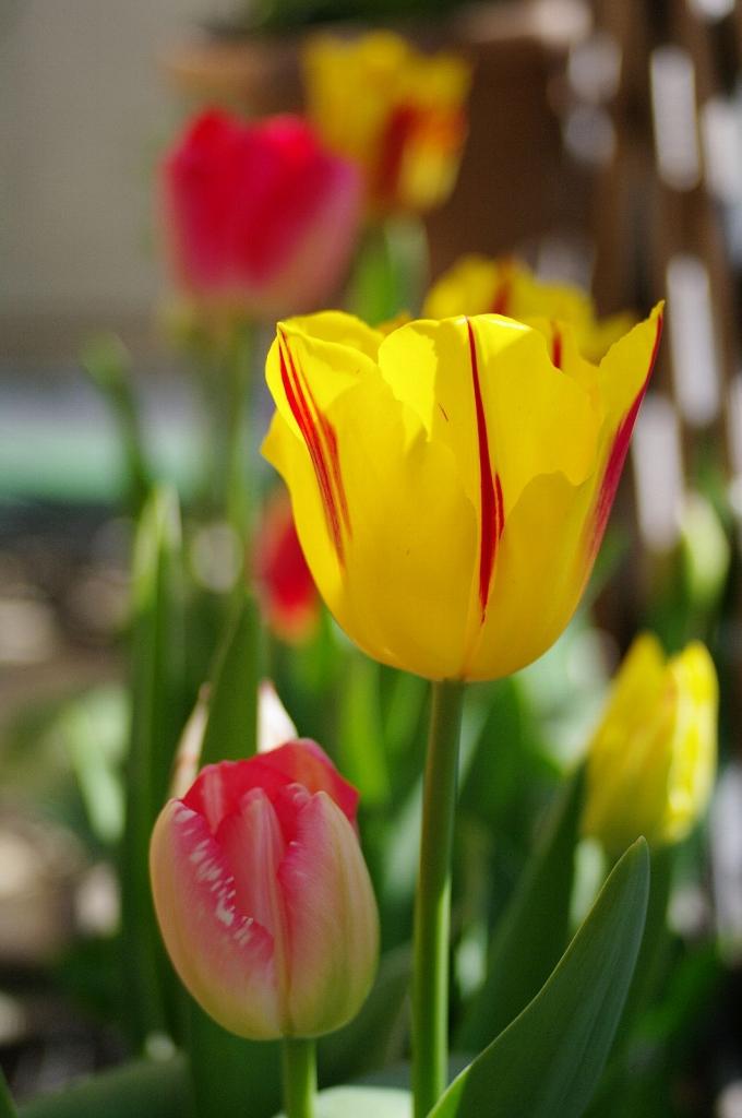ベランダの春