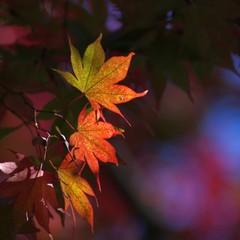 秋色。。。紅葉