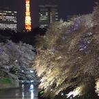 PENTAX PENTAX K-5 II sで撮影した(桜タワー)の写真(画像)