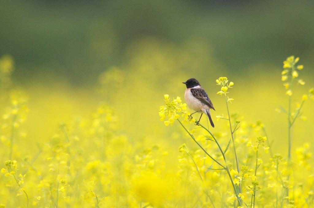 春色のび太
