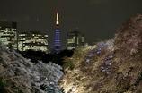 夜桜タワー