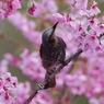PENTAX PENTAX K20Dで撮影した動物(ひよどり)の写真(画像)