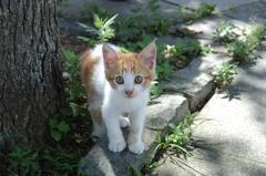 野良猫04