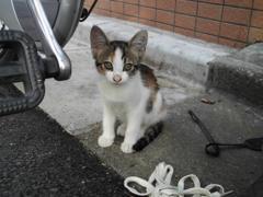 野良猫05