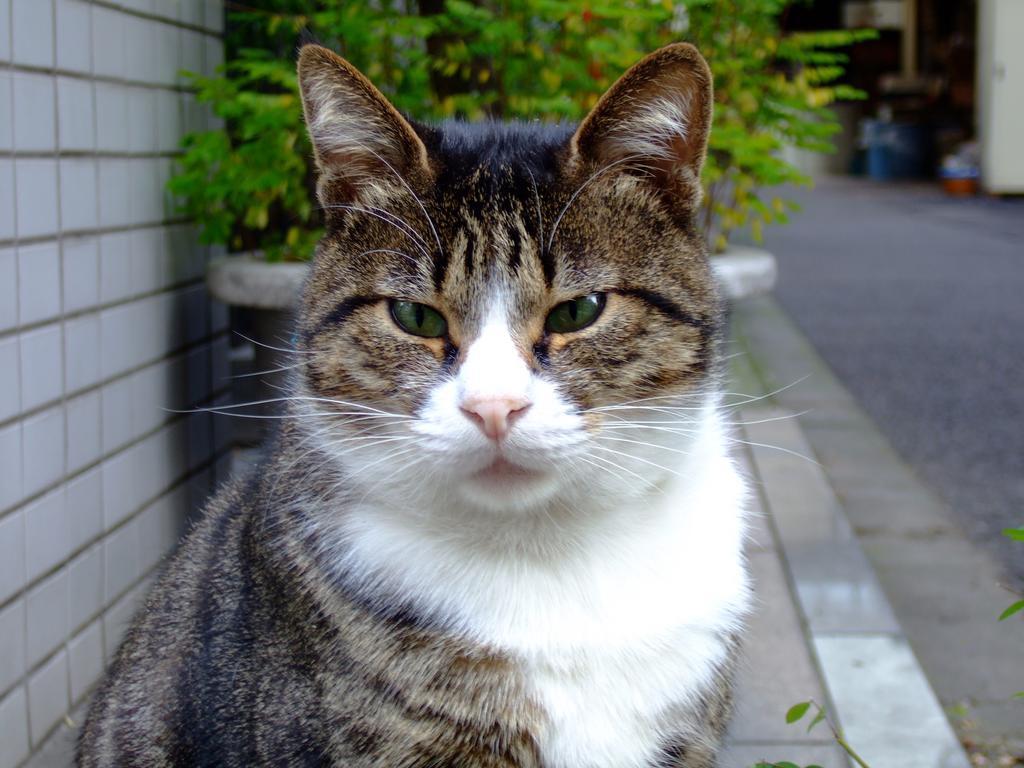 野良猫03