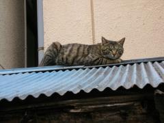 野良猫02