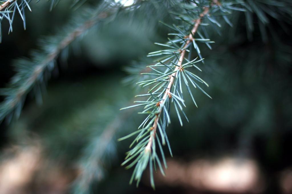 青々しい植物-2008年01月24日-