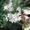 冬に咲く花-2008年01月24日-