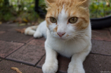 猫sanpo