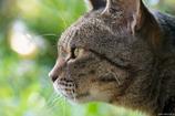 猫の森の日