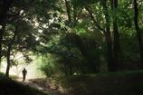 948木漏れ日の朝
