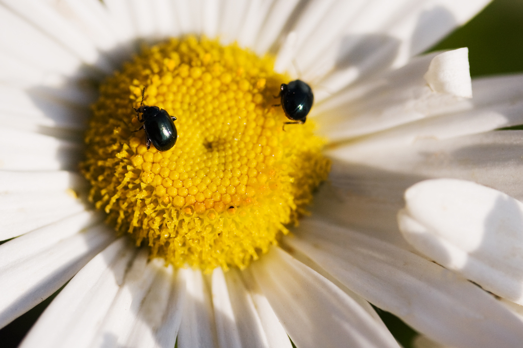 536顔のある花