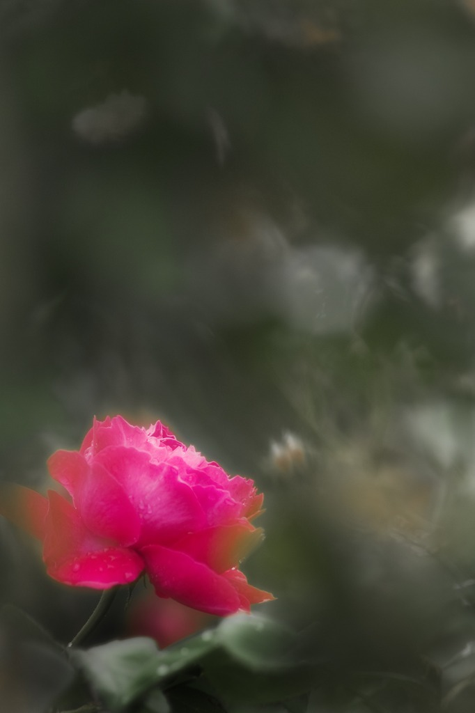桃色の香る花