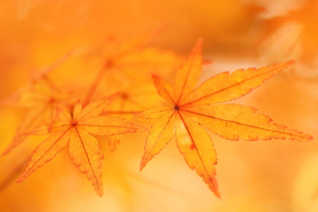 orange, orange